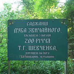 Рудківський дендропарк. Дуби, висаджені до 200 річниці від дня народження Т. Г. Шевченка