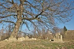 Еврейское кладбище в Роздоле