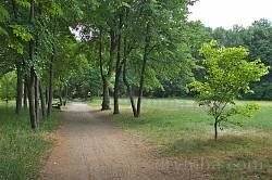 Парк садиби Лопухіних. Галявина