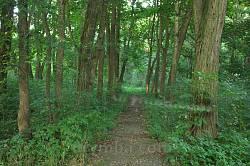 Стара доріжка у парку