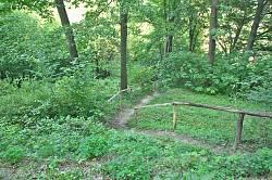 Кременецький ботанічний сад. Стежина
