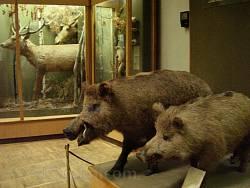 Чучела лесных животных