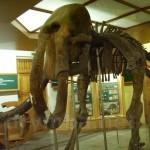 Музей природы (г.Житомир)