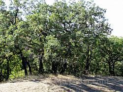 Ліс на Карадазі