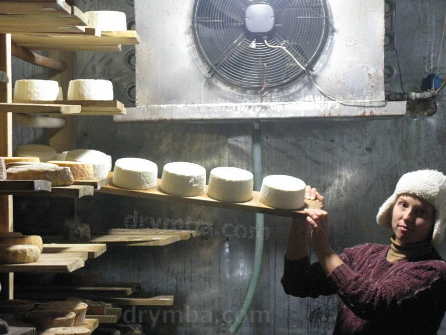 Визрівання сирів