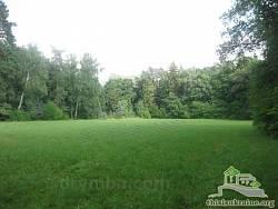 Парковая поляна