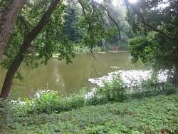 Чернігівщина. Тростянецький парк