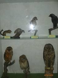 Чучела птахів