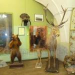 Зоологічна експозиція