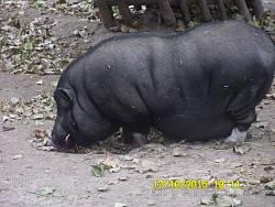 Рівненський зоопарк (м.Рівне)