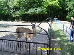 Вольеры с копытными животными