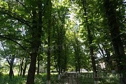 Садибний парк Шидловського