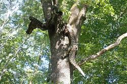 Деревянные скульптуры в парке