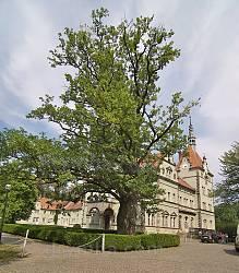 Охотничий замок-дворец графов Шенборнов