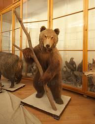 Львівський природознавчий музей. Ведмідь