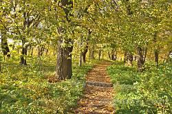 Парк садиби Потоцьких-Реїв. Доріжка