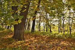 Парк садиби Потоцьких-Реїв