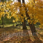 Парк усадьбы Потоцких-Реев (п.г.т. Микулинцы, Тернопольская обл.)