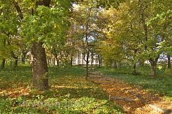 Уголок парка усадьбы Потоцких-Реев осенью