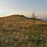 Гора Менчул (1294.4м) (масив Полонина Рівна, Закарпаття)