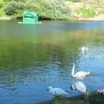 """Парк """"Софіївка"""". Лебеді на Ліщиновому озері"""