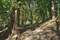 Паркова алея поблизу Теребовлянського замку