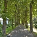 Вінниця. Центральна алея садиби М.Пирогова