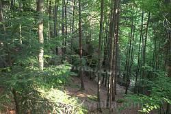 Територія вкрита мішаним лісом