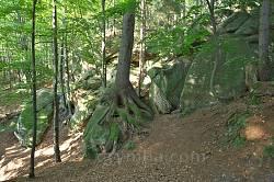 Хитросплетіння коренів дерев