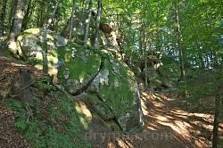 Деякі камені вкриті мохом