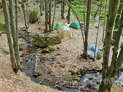 Місця для табору серед букового лісу