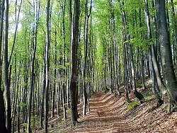 Алея у буковому лісі