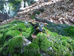 Плямиста саламандра - типовий мешканець Карпатських лісів