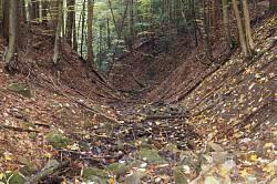 Яр лісового потоку