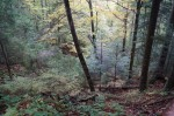 Лісовий куточок