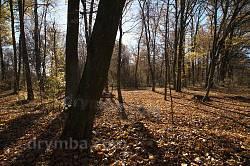Молодий ліс поблизу тунелю