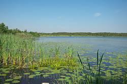 Береги озера Луки вкриті водяною рослинністю