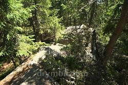Окремі кам'яні розсипи у лісі