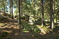 Ліс поблизу скель