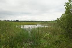 Прибережні зарості на озері Чорне Мале