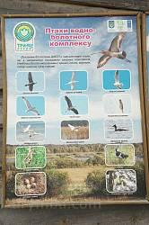 Птахи водно - болотного комплексу