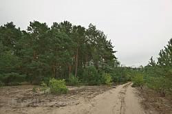Піщана дорога у лісі