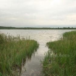 Озеро Карасинец (Шацкие озера, п.г.т. Шацк, Волынская обл.)