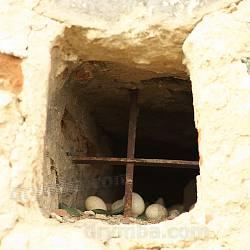 Гніздо у віконці