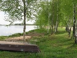 Березы на берегу озера
