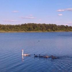 Озеро Луки (Лука) (с.Самары, Волынская обл.)