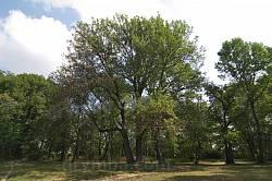 Парк садиби Дунін-Борковських