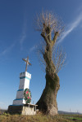 Придорожній хрест та дерево