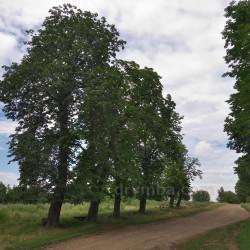 Парк, замчище, имение Гейделей - Краснопольских (с.Литячи, Тернопольская обл.)