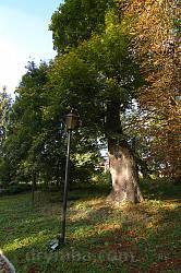 Уголок Неслуховського парка осенью